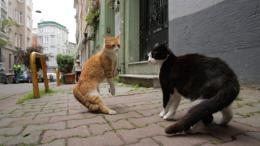 Kedi, des Chats et des Hommes photo 9 sur 12