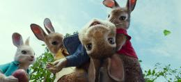 photo 5/14 - Pierre Lapin - © Sony Pictures