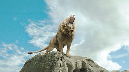 photo 3/61 - Le Monde de Narnia - Chapitre 1 : Le Lion, la Sorcière Blanche et l'Armoire Magique