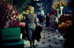 photo 7/9 - Kim Novak - Sueurs Froides - © Universal Pictures Vidéo