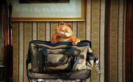 photo 16/30 - Garfield 2 - © 20th Century Fox