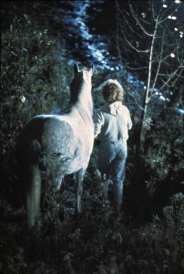 Equus Peter Firth photo 8 sur 9