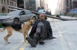 photo 11/41 - Will Smith - Je suis une Légende - © Warner Bros