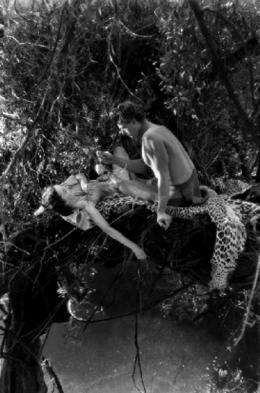 Johnny Weissmuller Tarzan, l'homme singe photo 6 sur 14