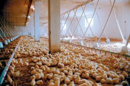 We feed the world Le marché de la faim photo 3 sur 7