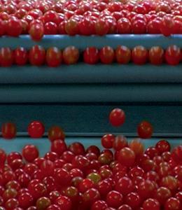 We feed the world Le marché de la faim photo 7 sur 7
