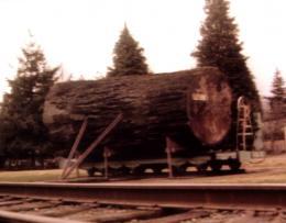 photo 116/136 - Twin Peaks - Saison 1