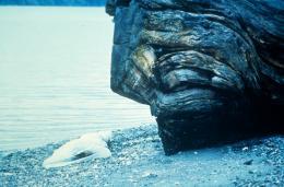 photo 62/136 - Sheryl Lee - Twin Peaks - Saison 1