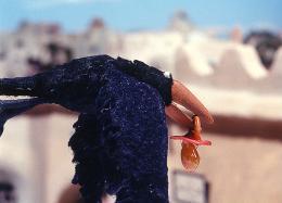 photo 13/15 - Le corbeau et Un Drôle de moineau - © Les films du Whippet