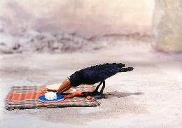 photo 11/15 - Le corbeau et Un Drôle de moineau - © Les films du Whippet