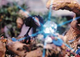 photo 14/15 - Le corbeau et Un Drôle de moineau - © Les films du Whippet