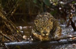 photo 9/17 - Amazonia - © Le Pacte