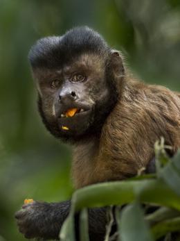photo 4/17 - Amazonia - © Le Pacte