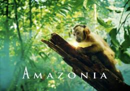Amazonia photo 2 sur 17