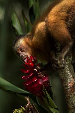 photo 6/17 - Amazonia - © Le Pacte