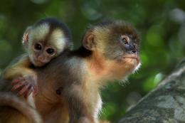photo 16/17 - Amazonia - © Le Pacte