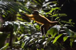 photo 11/17 - Amazonia - © Le Pacte