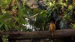 photo 7/17 - Amazonia - © Le Pacte