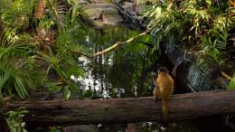 Amazonia photo 7 sur 17