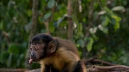 photo 1/17 - Amazonia - © Le Pacte