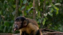 Amazonia photo 1 sur 17