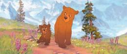 photo 3/15 - Frère des ours