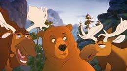 photo 9/15 - Frère des ours