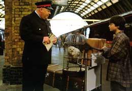 photo 17/22 - Daniel Radcliffe - Harry Potter à l'école des sorciers
