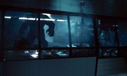 Hulk Eric Bana photo 3 sur 14