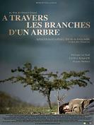 A travers les branches d'un arbre