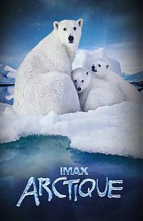 Ours polaires - Banquise en péril