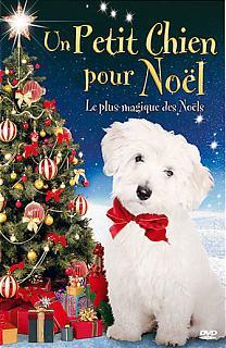Un petit chien pour Noël