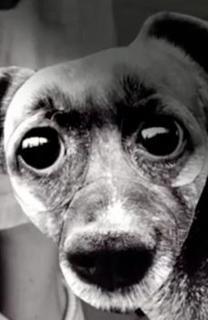 Peau de chien
