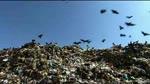 Extrait 3 VOST : Waste Land