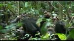 Extrait 6 : Chimpanz�s