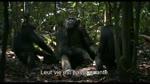 Making of : Tourner dans la for�t tropicale : Chimpanz�s