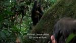 Bonus : extrait Les Coulisses : Chimpanz�s
