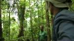 Making-of : La lumière de la forêt : La Vie Pure