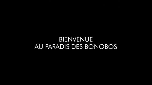 Bonobos : Alain Tixier