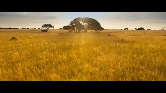 Bande Annonce : Le Crocodile du Botswanga