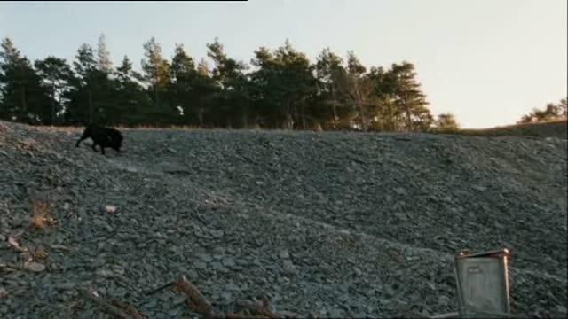 Labrador : Thomas Karlsen