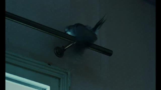 Extrait  : L'Oiseau