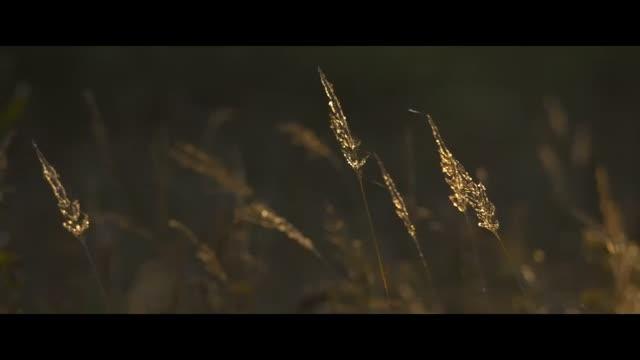 Teaser : Les Saisons