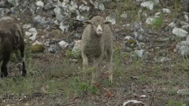 Bande-annonce : La Gueule du Loup