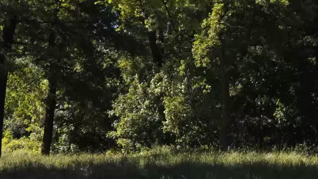 Bande-annonce : Le Bois dont les Rêves sont faits