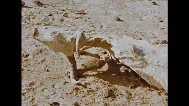 Bande-annonce : La Chasse au Lion à l'Arc