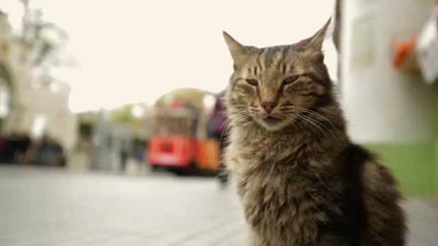 Bande-annonce : Kedi, des Chats et des Hommes
