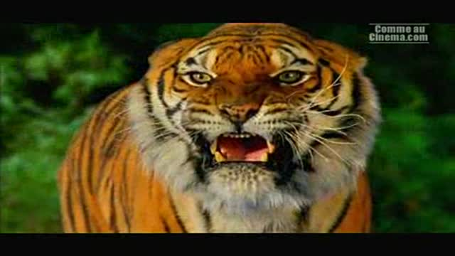 L'Empire  du Tigre : Gérard Marx