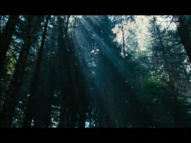 Wilderness : Stephen Don