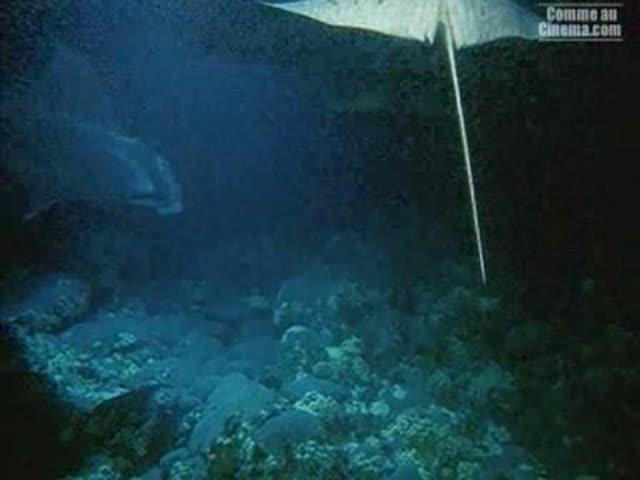 Deep Sea : Judy Caroll